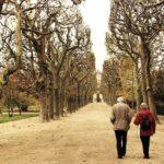 個人年金保険とiDeCo、老後資金の準備にはどちらがおすすめ?