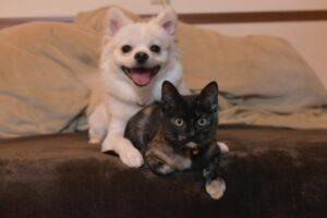 ペット保険はいらない?必要ない人と入るべき人を徹底解説!